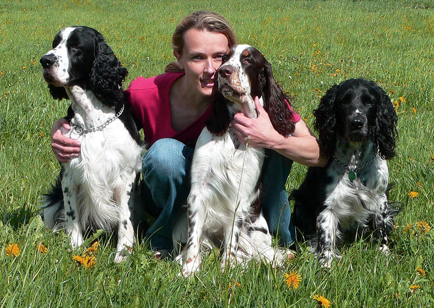 English springer spaniels in kennel Mysterion Britanica